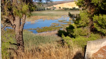 wetland with a lot of rare birds