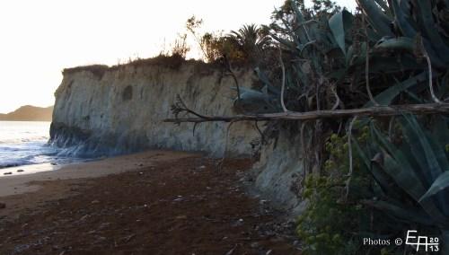 overturned agave