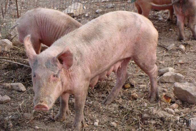 Miss Piggy enjoys the evening