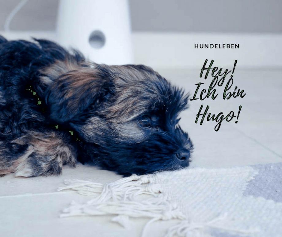 Hallo, ich heiße Hugo und wohne jetzt hier...die Wahrheit über den Alltag mit einem Hundewelpen!