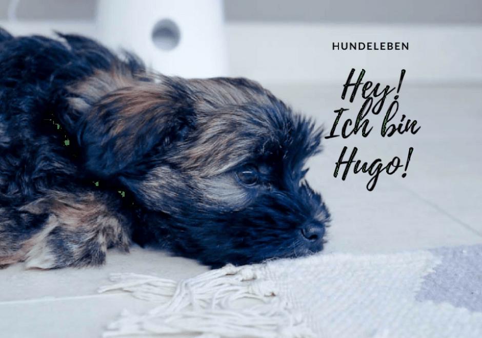 Die Furbo Hundekamera und der Alltag mit einem Hundewelpen!