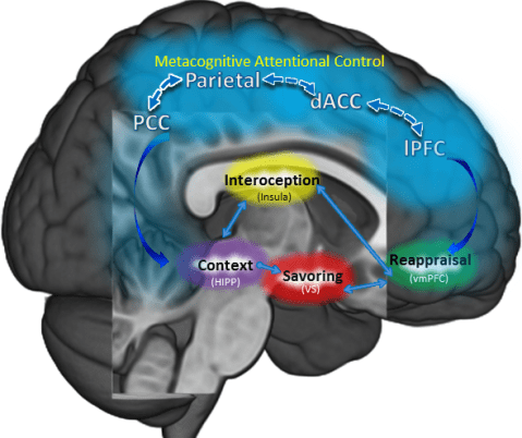 mindfulness-centered-regulation-in-brain