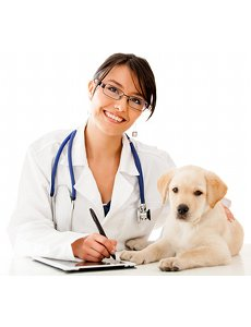 5 conseils pour faire plaisir<br /> à votre vétérinaire