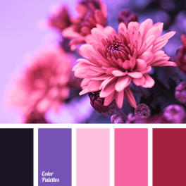 color-palette-2953