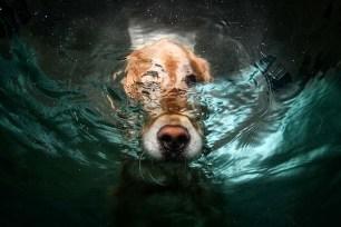 Underwater dogs_002