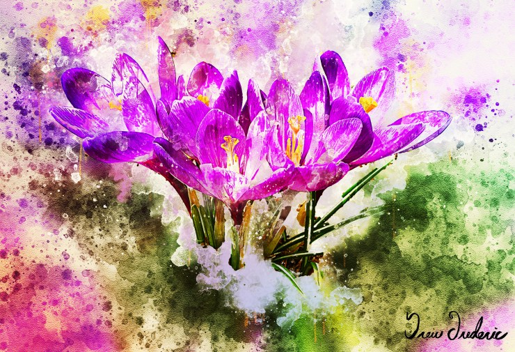 Mary Ryan Crocus Watercolor IMG_4852