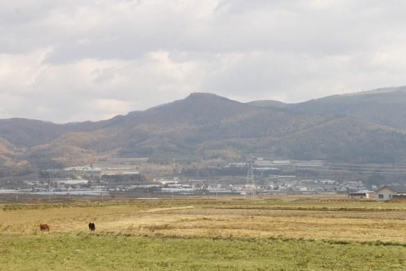 新函館北斗駅北口の前の景色。まさか馬がいるとは思いもせず驚きました。