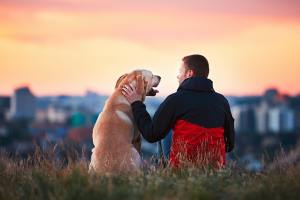 Enjoying sun. Man is caressing yellow labrador retriever. Young man sitting on the hill with his dog