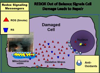 Damaged Redox
