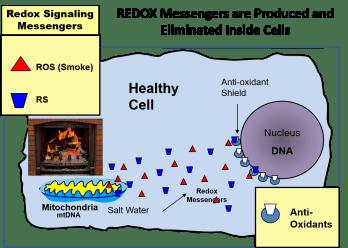 Healthy Redox