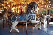 horse-756852__340
