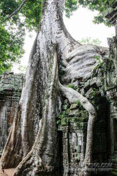 Cambodia 2015 LowRes-155