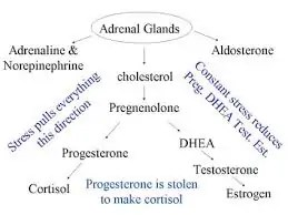 adrenal glands stress