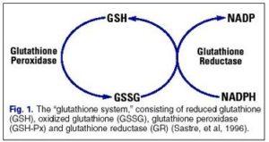 glutathione recyling