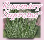Rosemary Estrogen