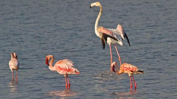 flamingoes bhandup (1)