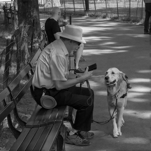 A man and his best friend on a bench in Central Park.