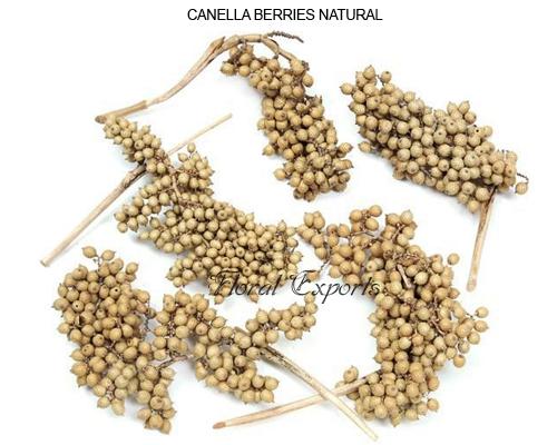 Bulk Canella Berries wholesale sepplies