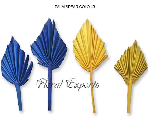 Mini Palm Spear Colour