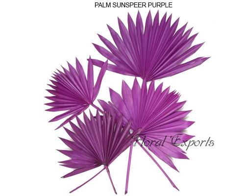 Palmsunspear Purple