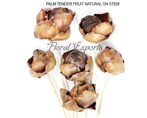 Palm Tender Fruit Natural