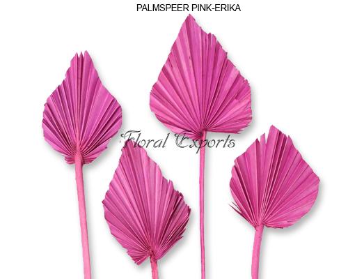 Palmspear Pink - Erika