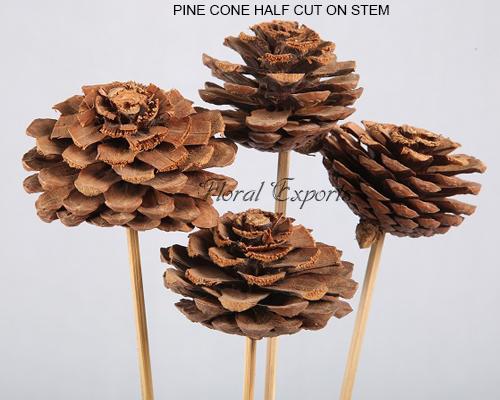 Pine Cone Natural on Stem Half Cut - Dried Pine Cone