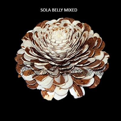 Sola Belly Flower Mix 10cm Natural