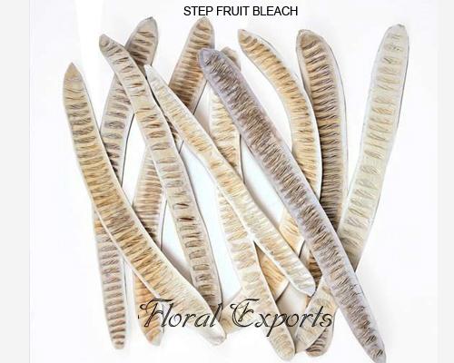 Step Fruit Long Bleach Loose
