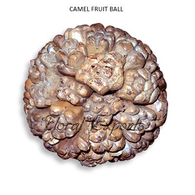 Camel Fruit Balls 10cm Natural - Decorative Balls Wholesale