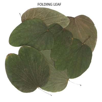 Folding Leaves Natural