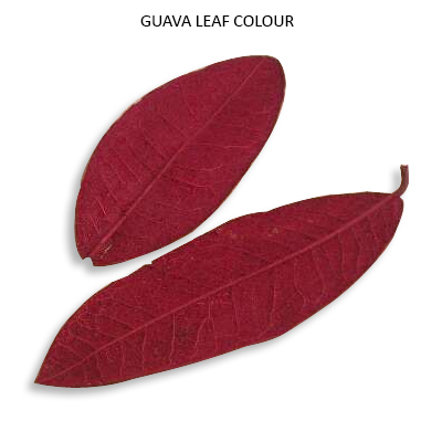 Guava Leaves Colour