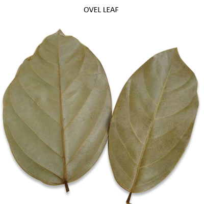 Ovel Leaves Natural - Bulk Dry Leaves Wholesale