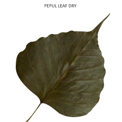 Dried Peepal Leaf Natural