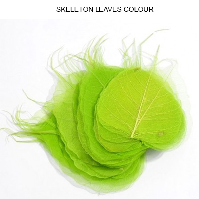Peepal Skeleton Leaf Lt Green - Dry Leaves Manufacturers, Suppliers & Wholesalers