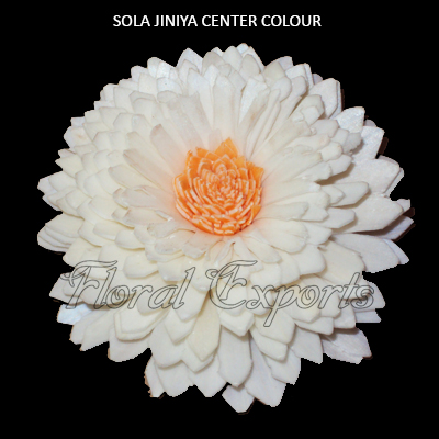 Sola Zinniya Center Colour 10cm - Wholesale Sola Flowers Suppliers