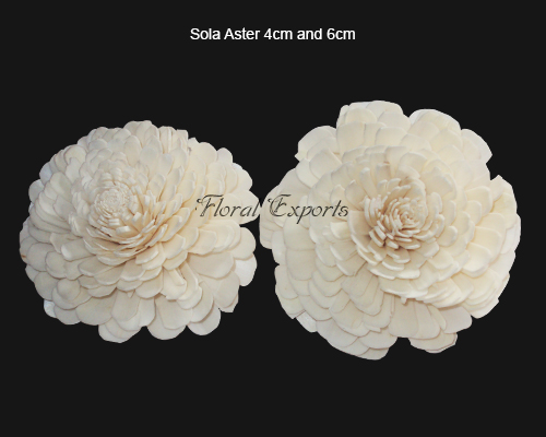 Sola Aster 4cm & 6cm Natural - Sola Belli Flowers Manufacturer