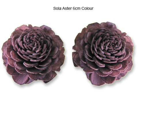Sola Aster 6cm Wine Colour - Sola Flowers Manufacturer
