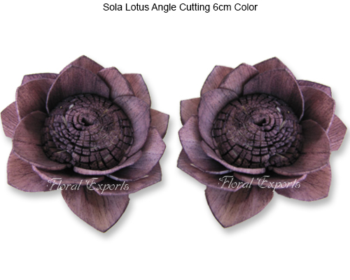 Sola Lotus Angle Cutting 6cm - Bulk Sola Flowers