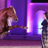 Equestrian  Dance