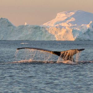 Greenland Sailing whale watching Drifters guide