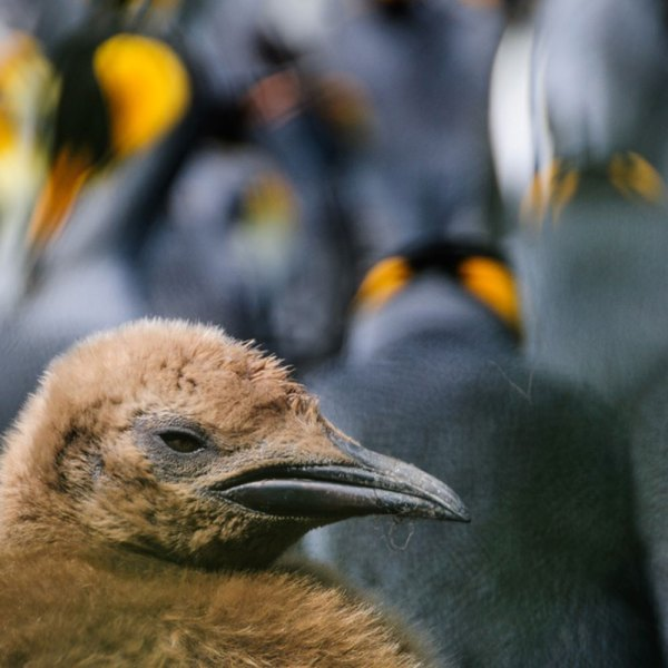 Drifters Guide Antarctica Falklands Experience Tour