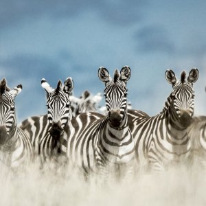 Drifters Guide Tanzania Safari Experience Tour