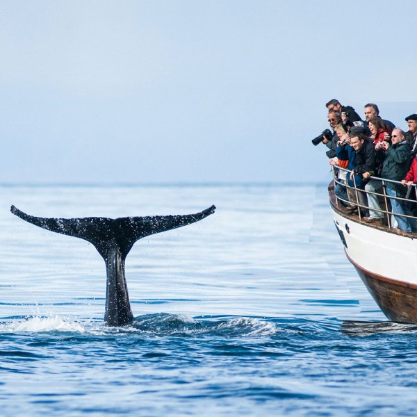 Hjalteyri Whale Watching Cruise - Drifter's Guide to the Planet