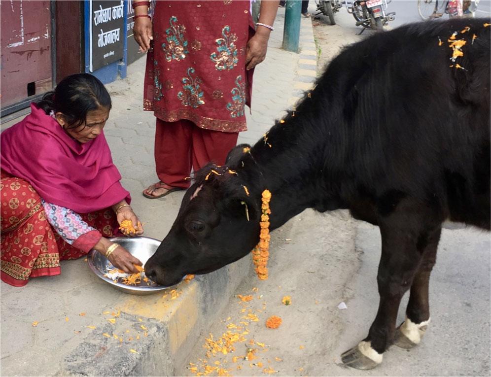 Nepal Kathmandu Animal Sanctuary - Drifters Guide To the Planet