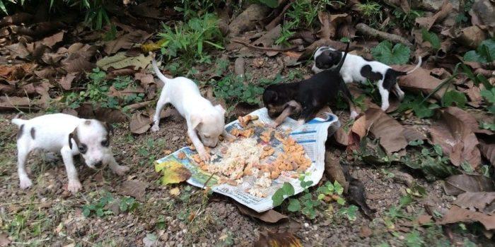 volunteer with animals in jamaica