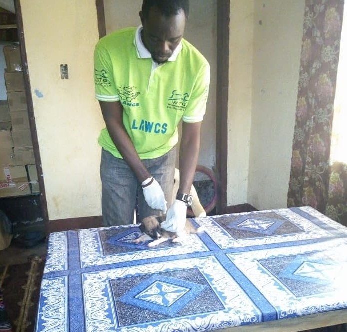 Helping Animals Coronavirus