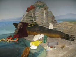 Crime Against Nature (Mediterranean monk seal)