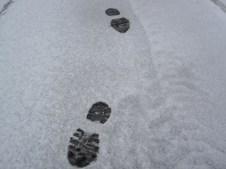 Annie Tracks!