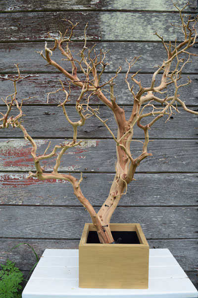 "Sandblasted Manzanita ""trees"""